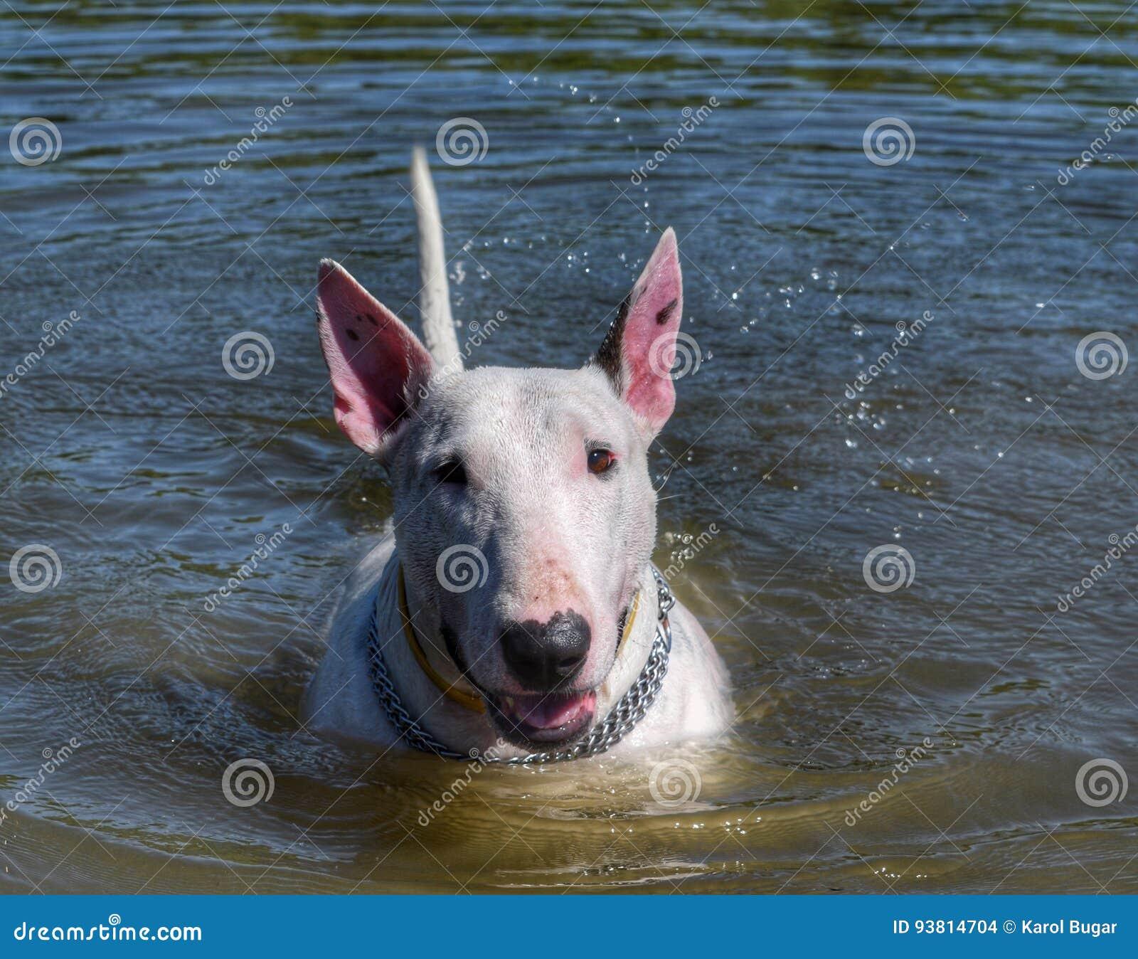 Dog stock photo  Image of lake, pitbull, portrait, tree