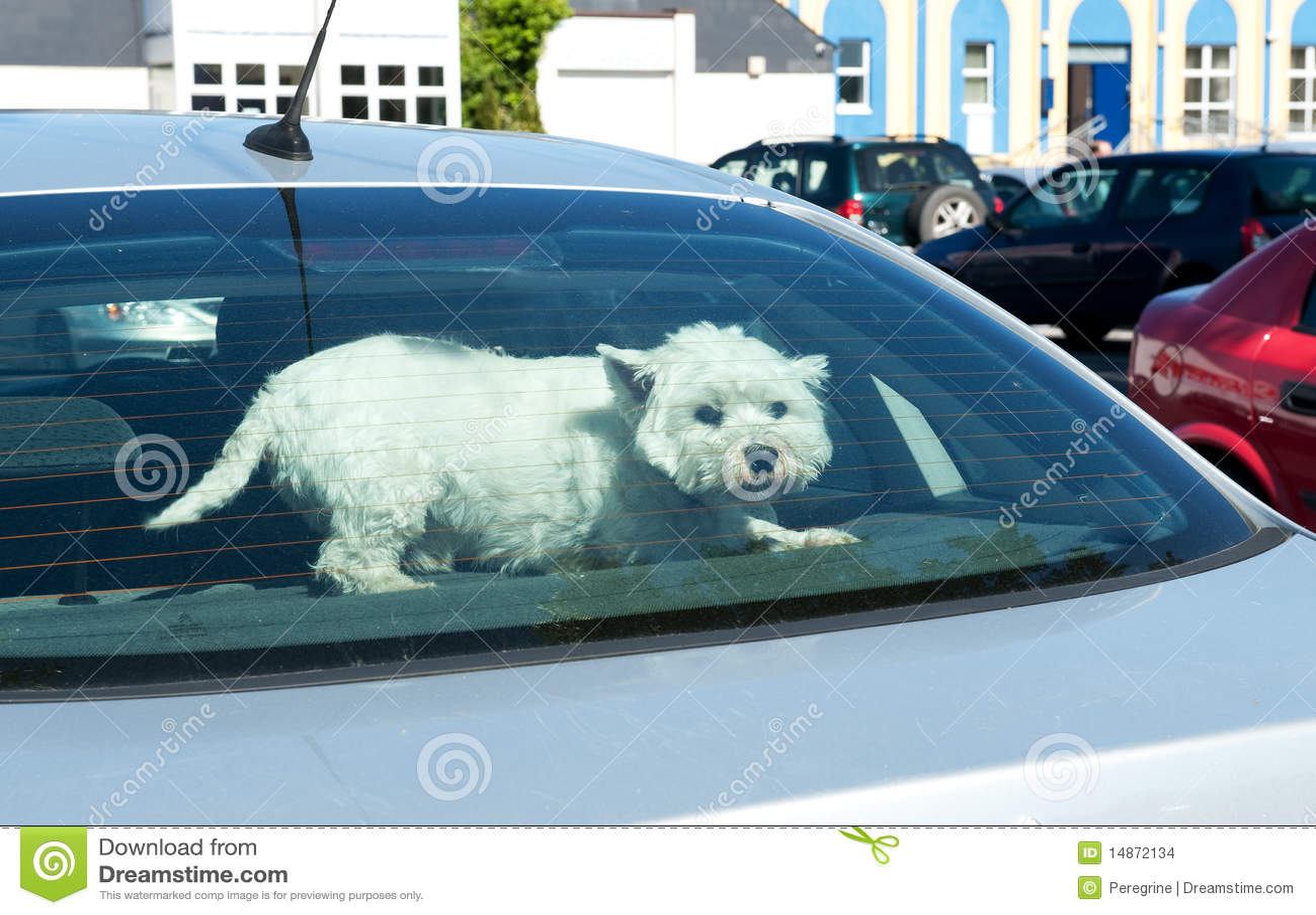 Dog In A Car Rear Window