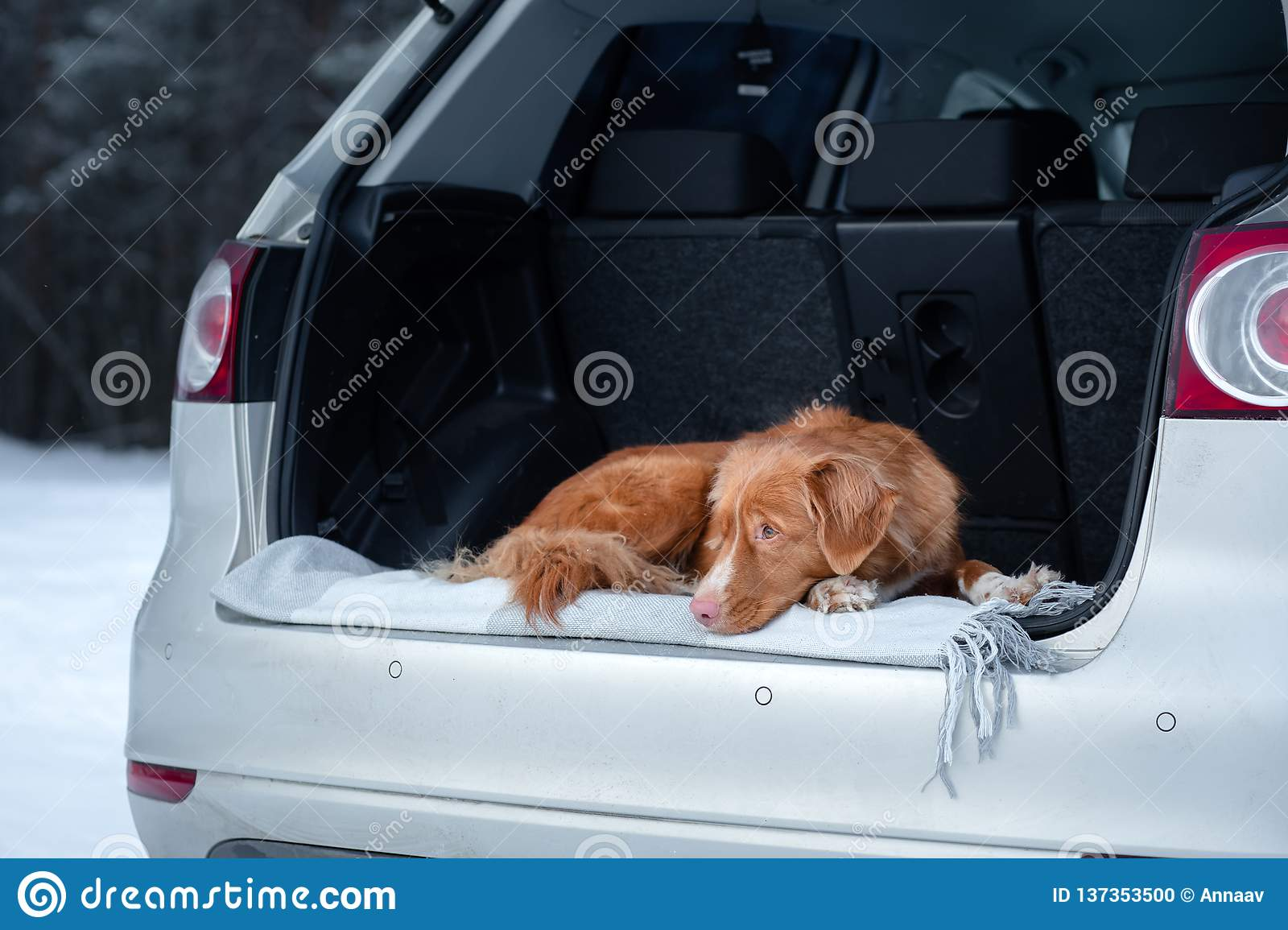 Dog Is In The Car  Travel With A Pet  Healthy Lifestyle