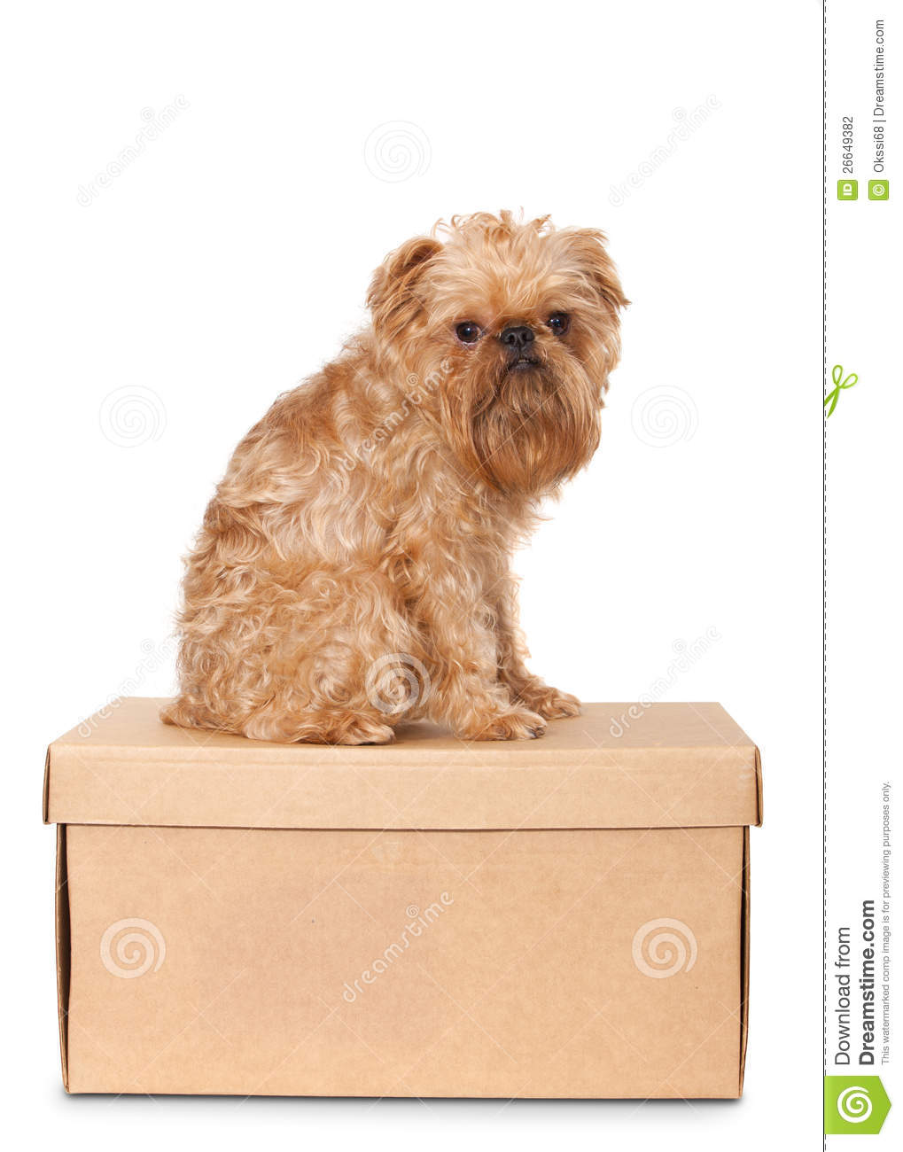 Dog On Cardboard Box Stock Photography - Image: 26649382
