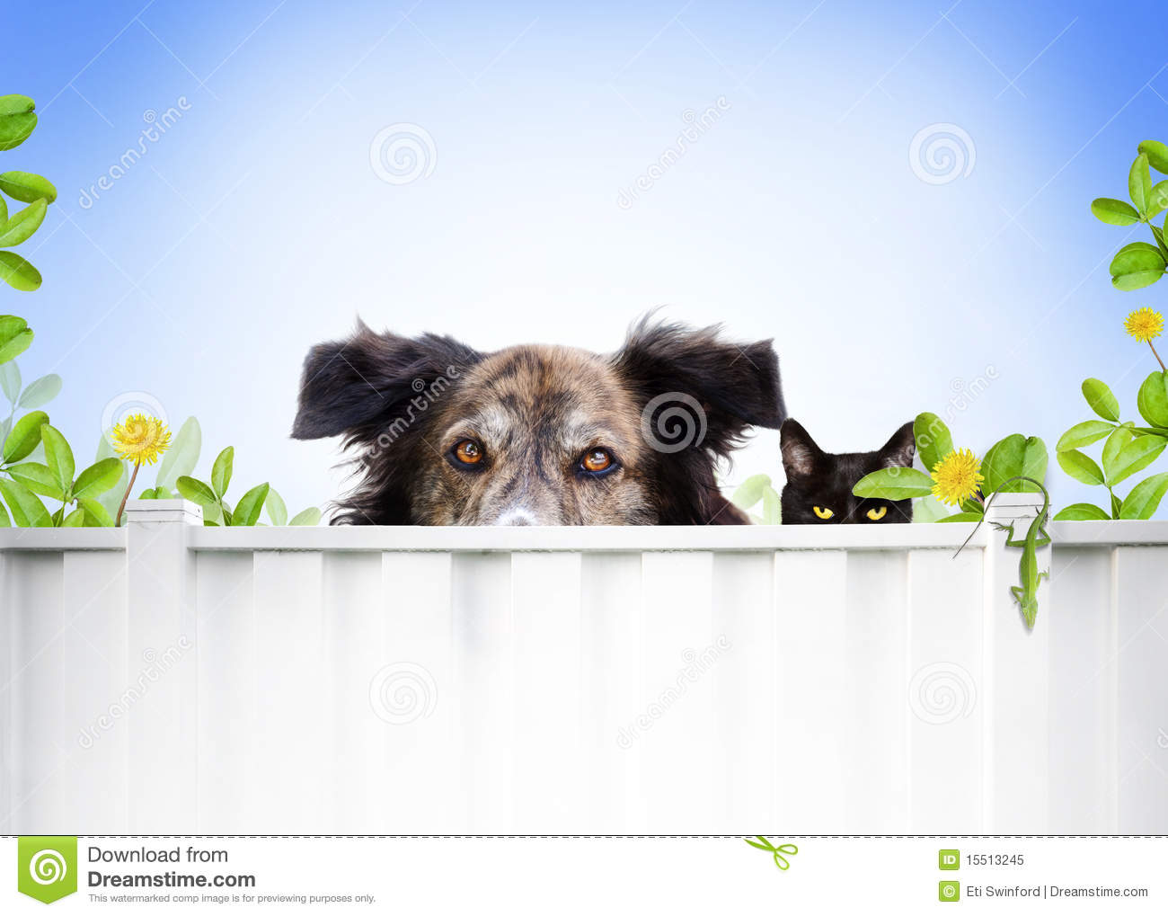 Royalty Stock Photo Dog and cat Royalty Free Stock