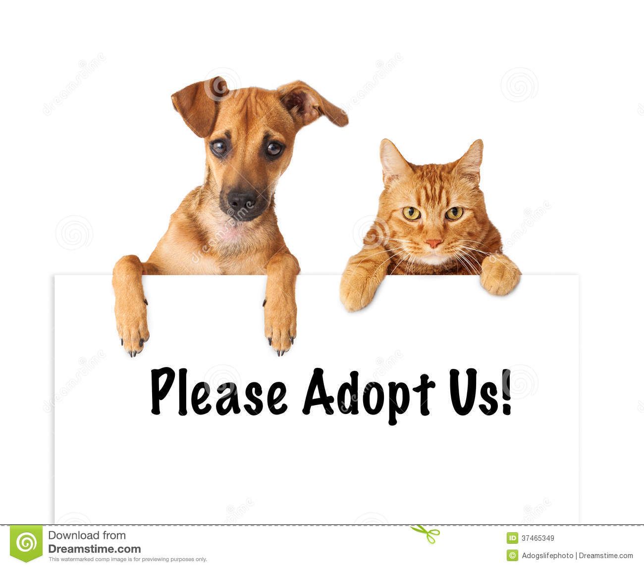Adopt A Dog Or Buy A Puppy