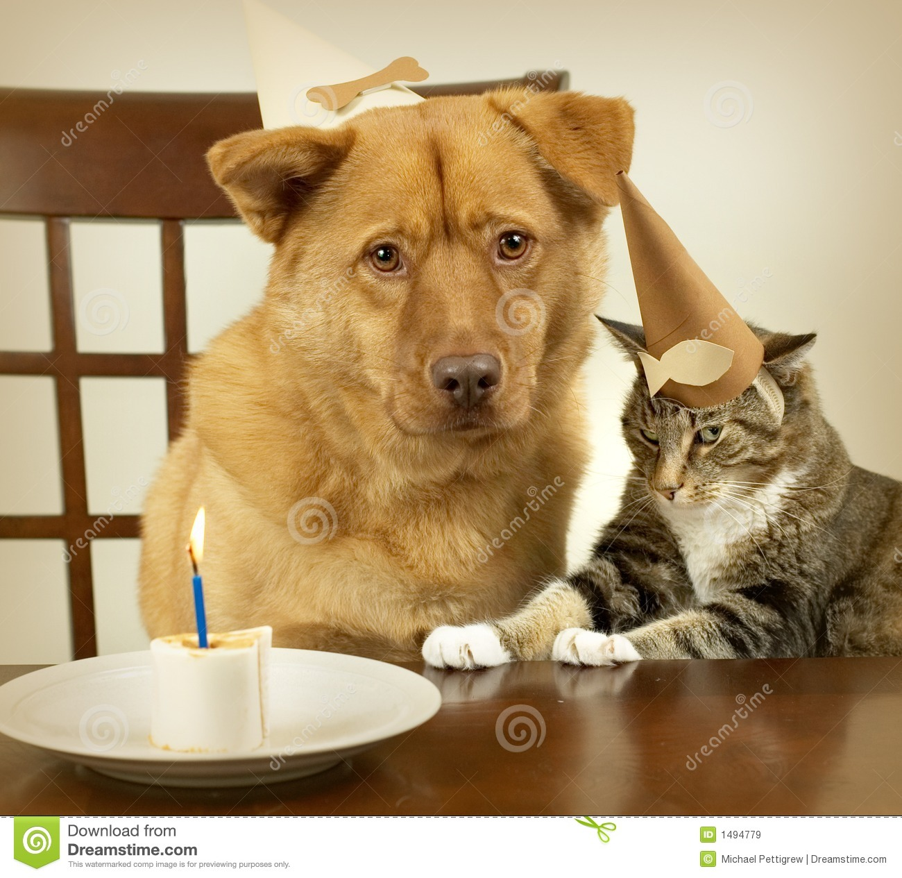 Dog And Cat Celebrating Birthday Royalty Free Stock Images - Image ...