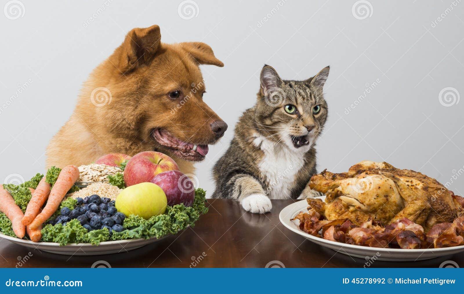 Cat Food Versus