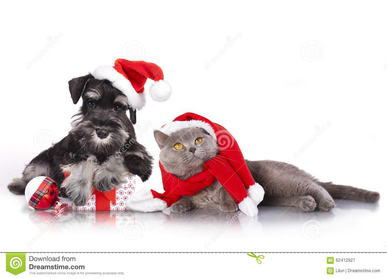 christmas dog and cat info