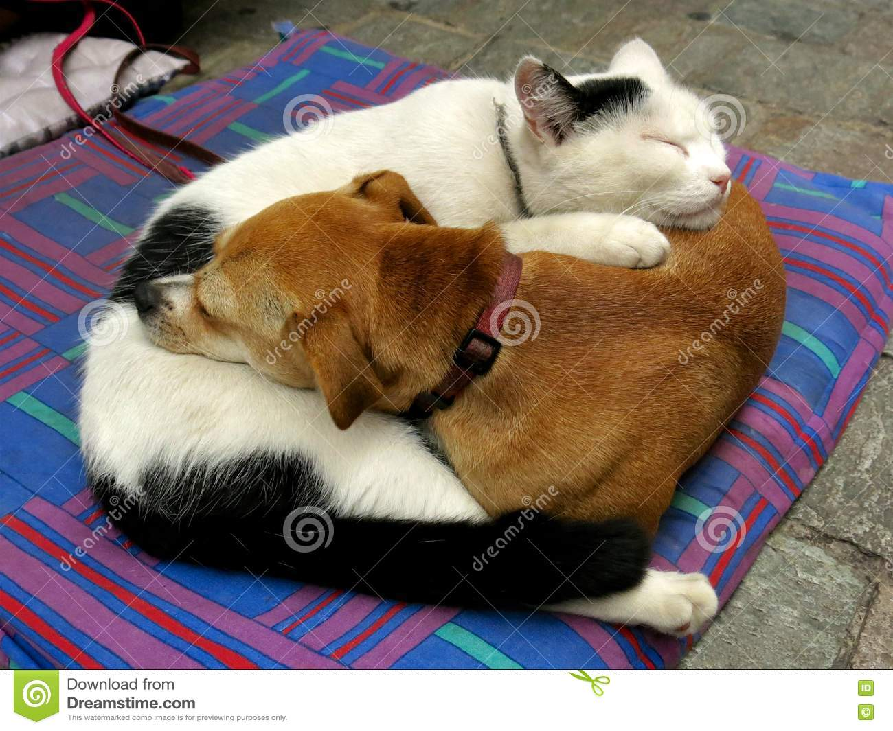 Dog And Cat Curled Up Like Yin And Yang Stock Photo