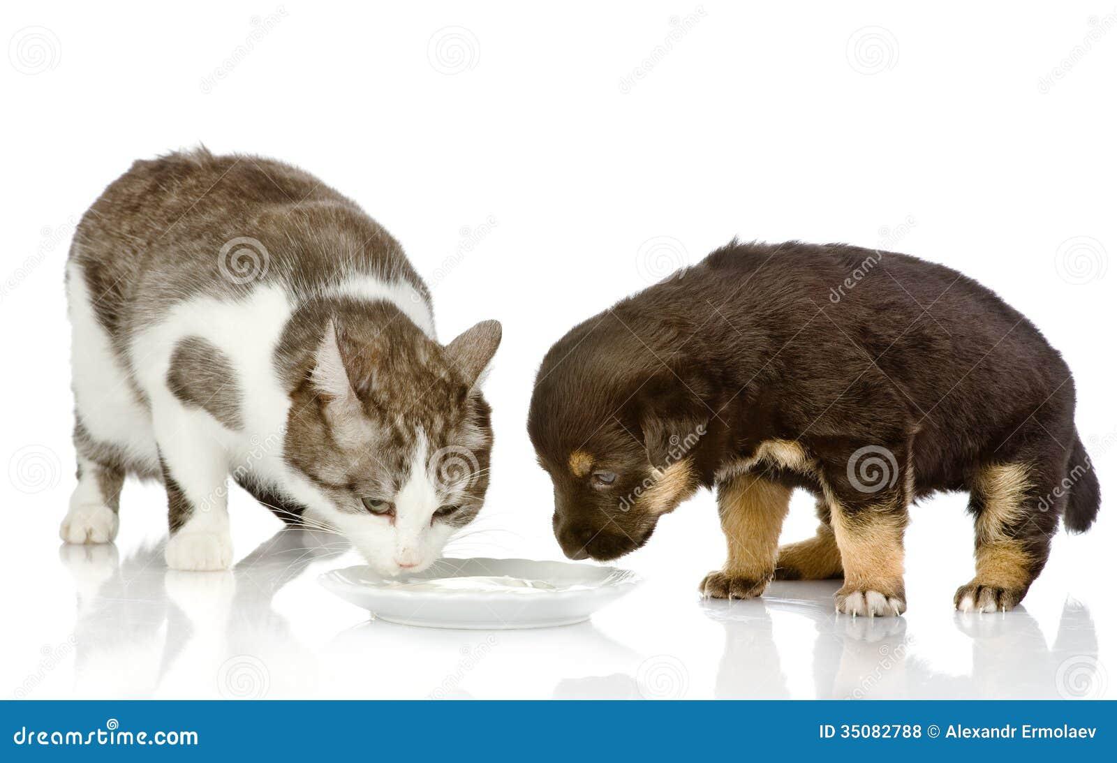 Cat Keeps Eating Dog Food