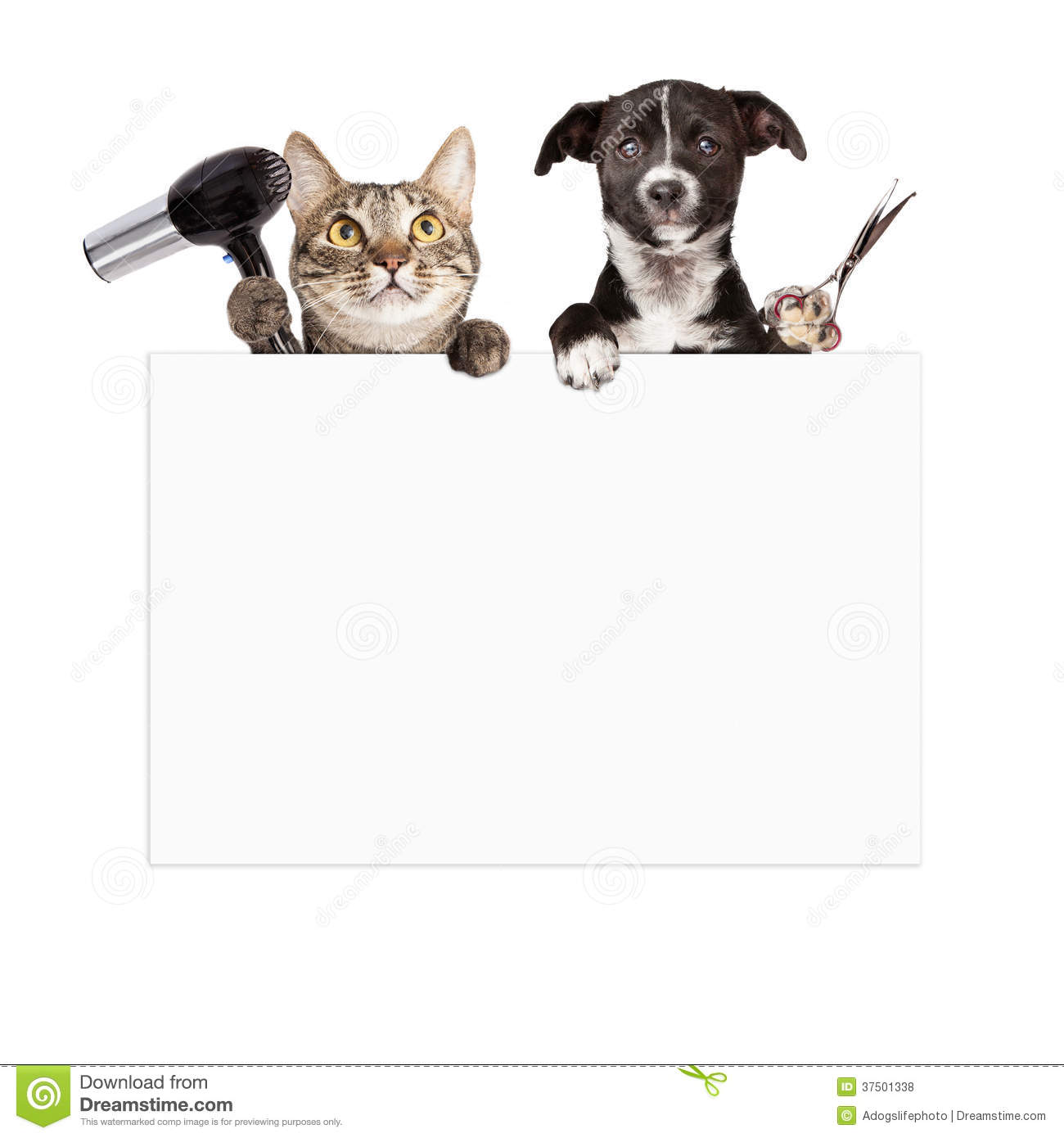 Dog And Cat Grooming Blank Sign Stock Photo Image Of Beauty