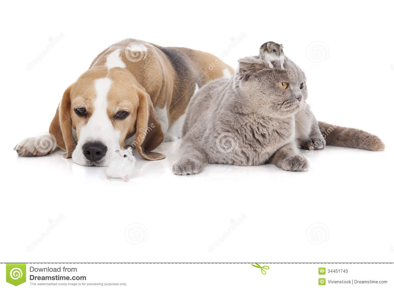 Cat Dog Plus Download