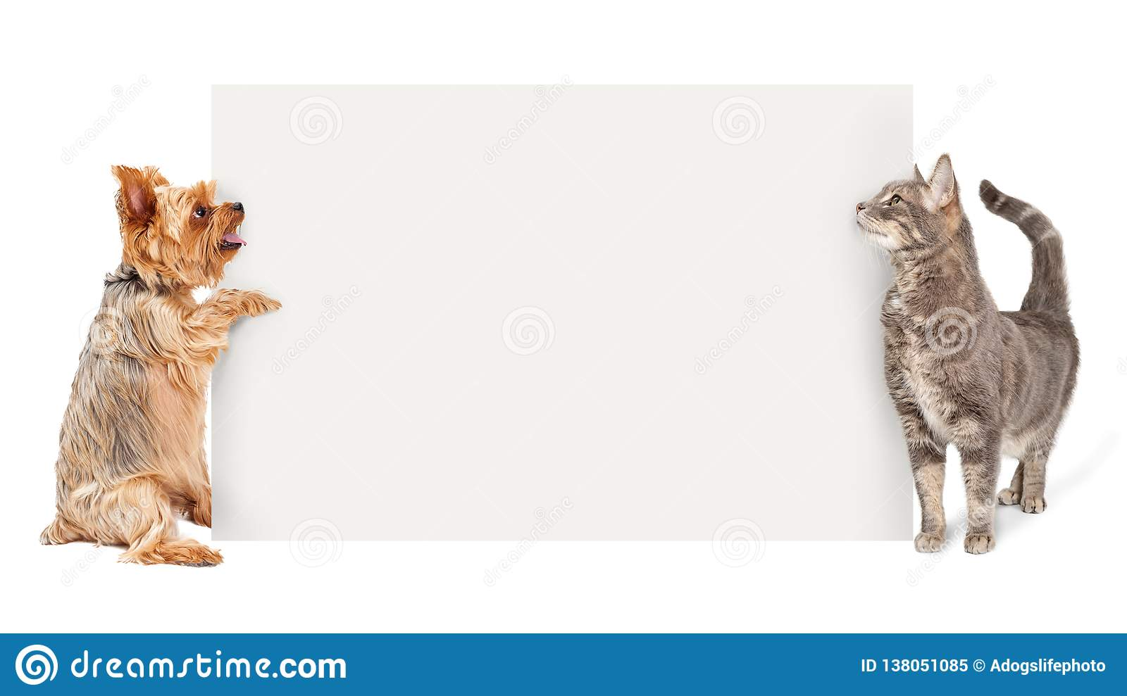 Dog And Cat Holding Up Blank Sign Stock Image Image Of Sign Blank 138051085