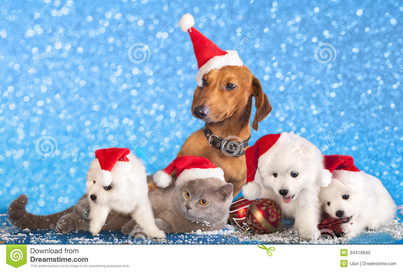 Dogs and Cats Wearing Santa Hats
