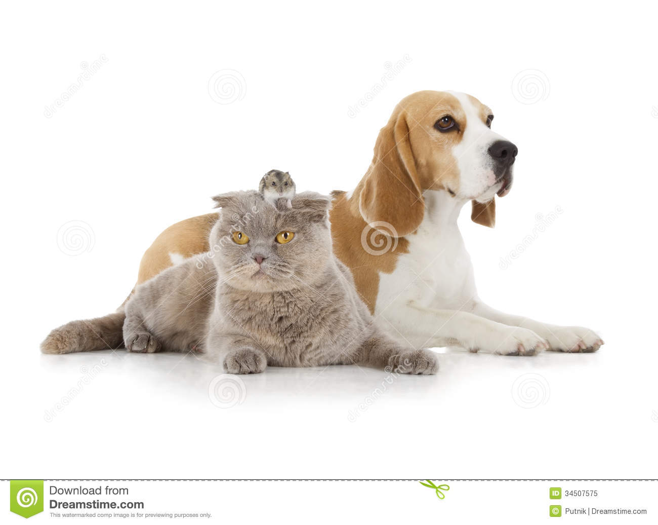 Dog, Cat And Mouse Royalty Free Stock Photo - Image: 34507575