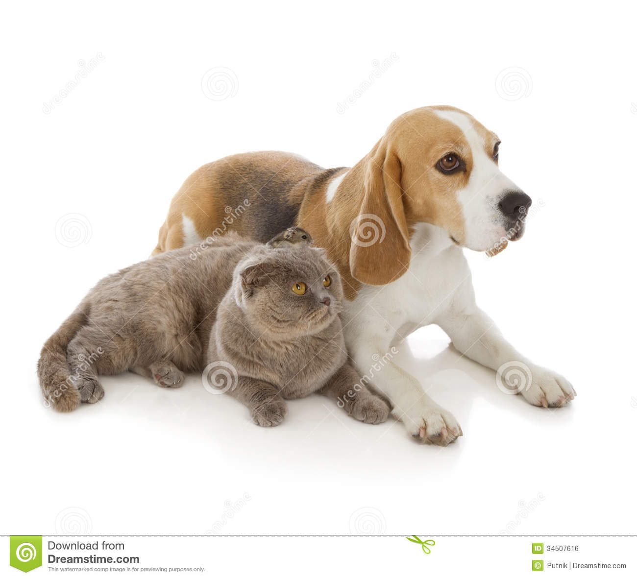 Dog, Cat And Mouse Stock Photo. Image Of Domestic, Breed