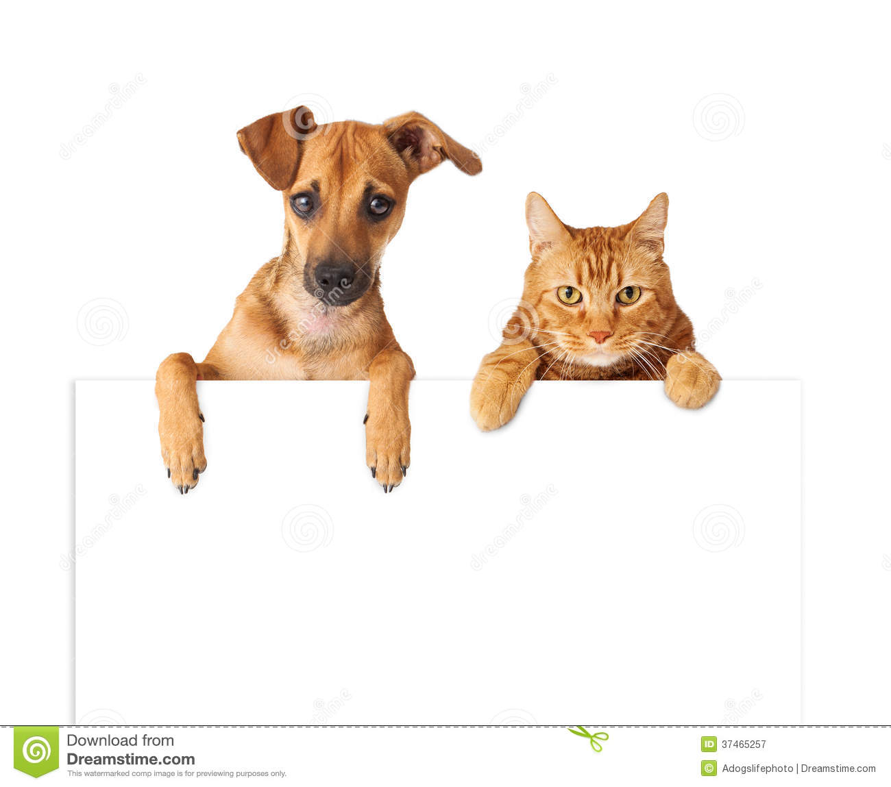 Dog And Cat Over Blank Sign Royalty Free Stock Photography - Image ...