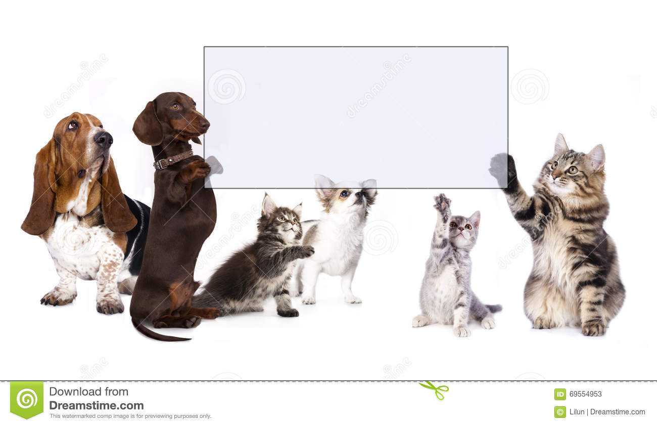 Dog And Cat Paws Holding Banner Stock Image Image Of Chocolate Cardboard 69554953