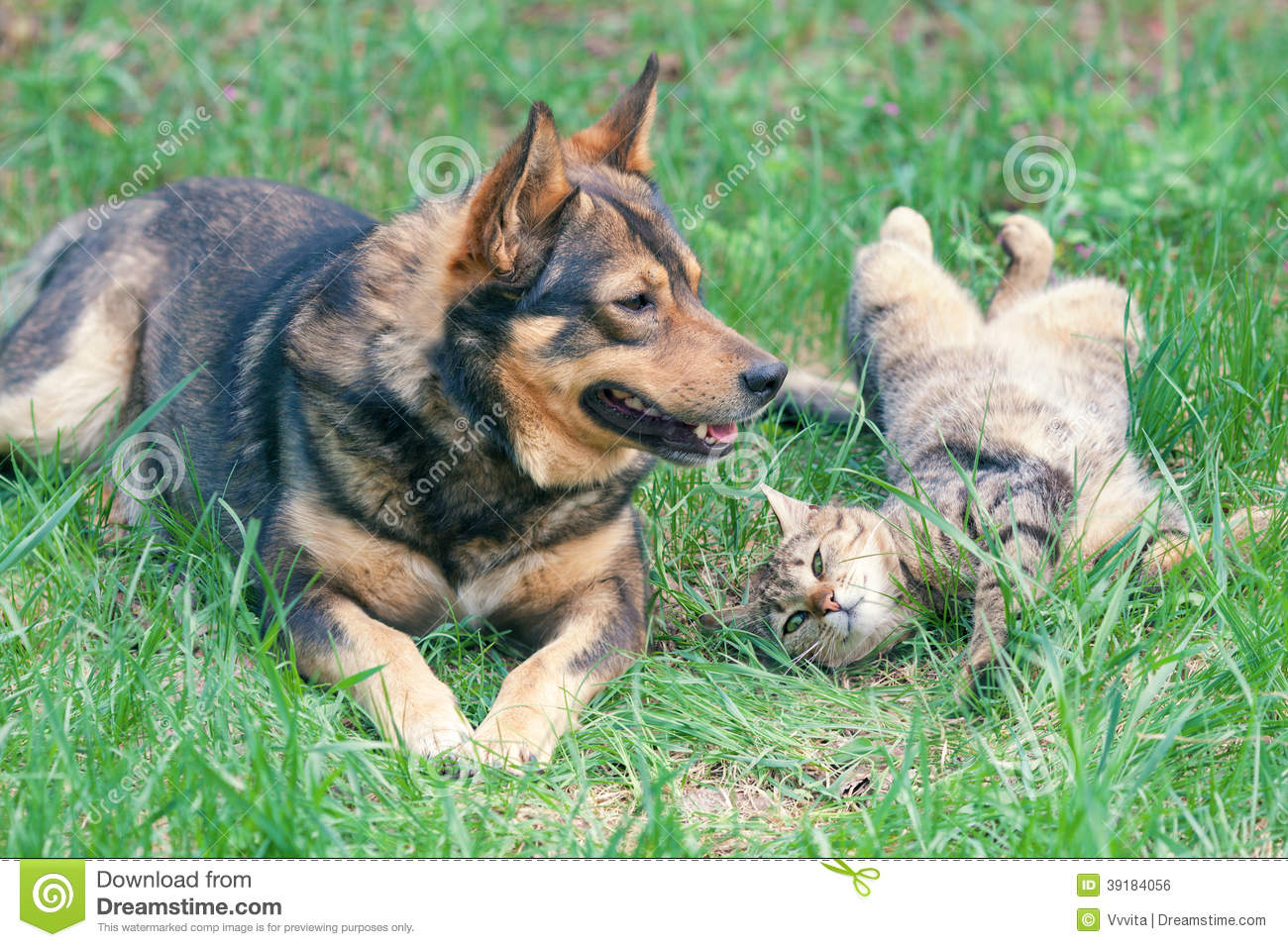 Play between Dogs and Cats: Keeping Them Safe | PetSafe ... |Playing Cats And Dogs