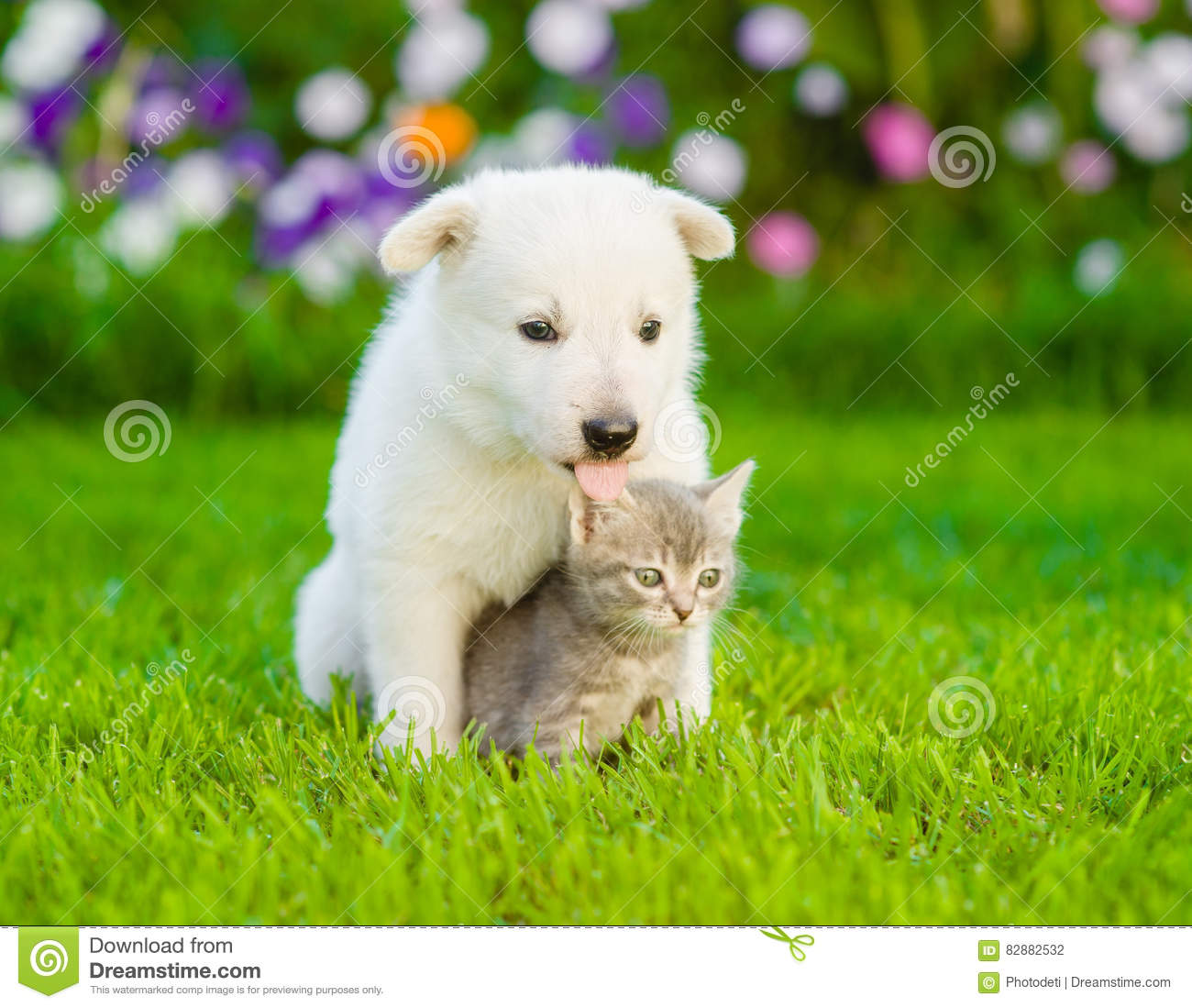 Dog with cat sitting together on green grass