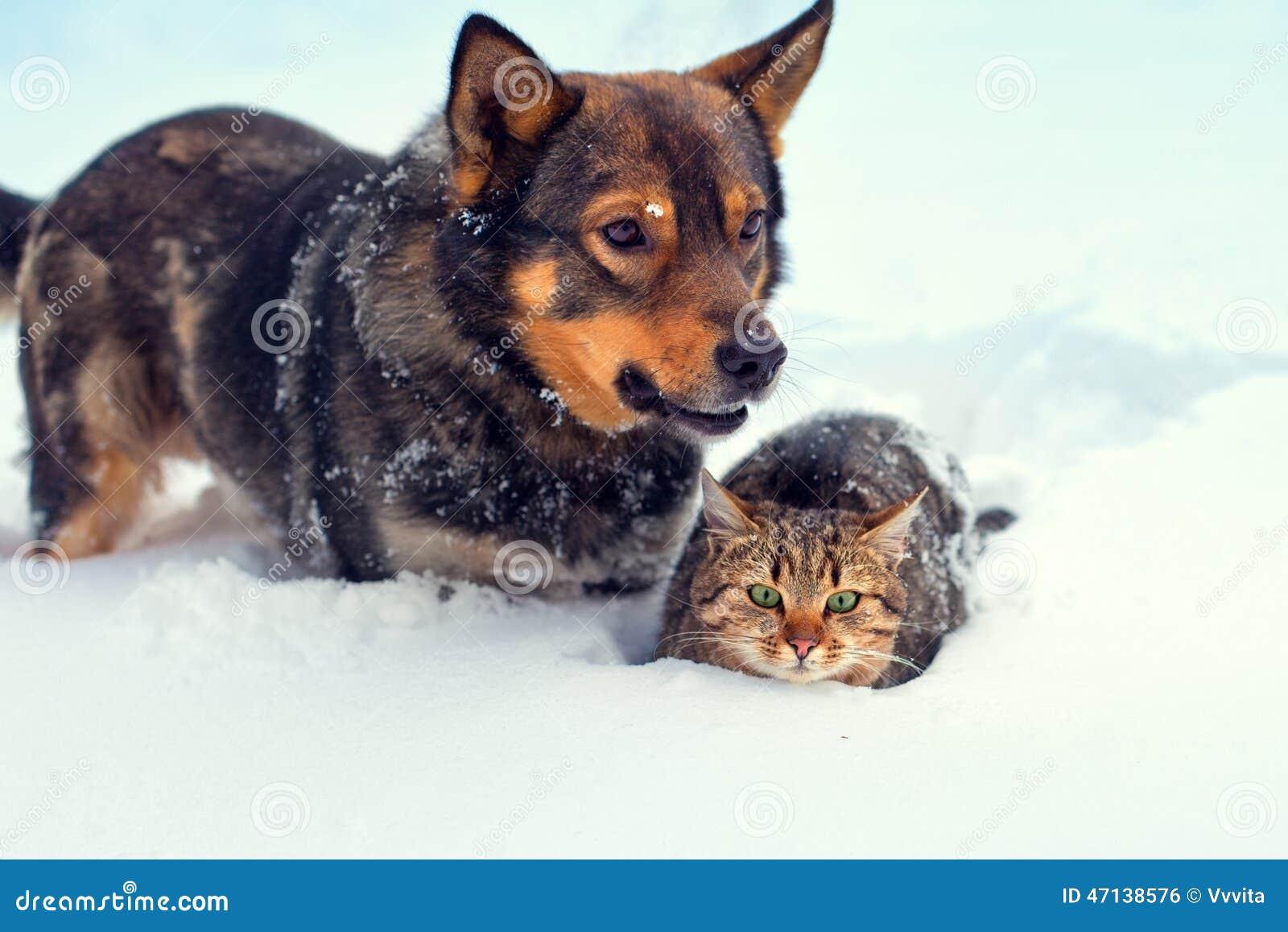 Outdoor Christmas Animals