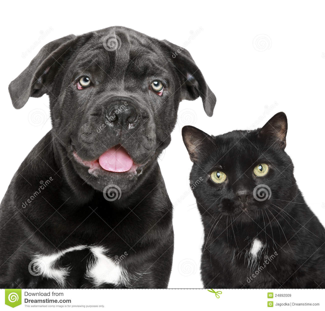 free clipart of dog and cat together - photo #49