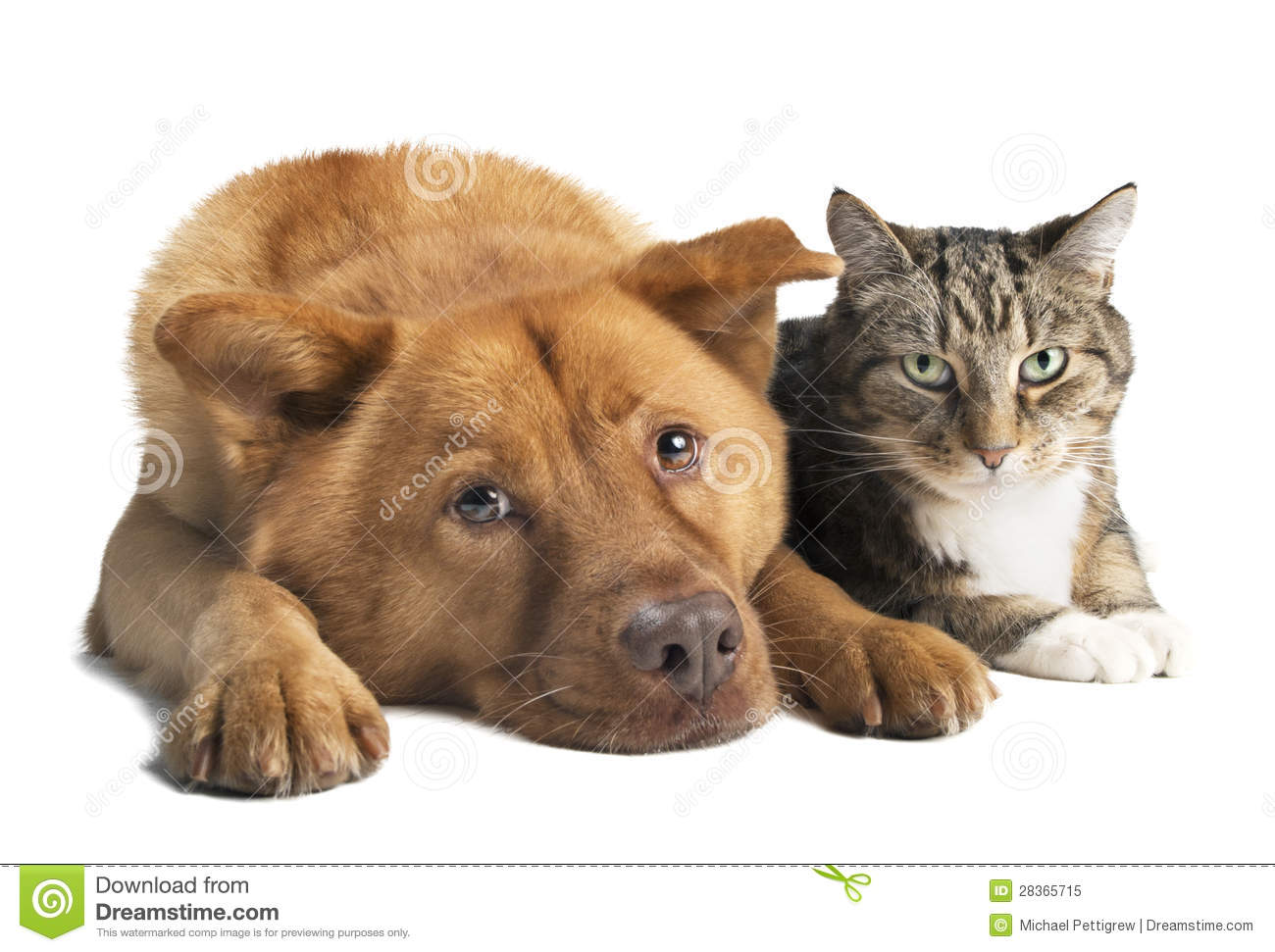 free clipart of dog and cat together - photo #33