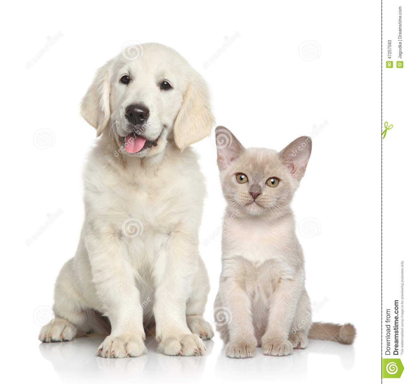 Dog And Cat Together Stock Image Image Of Animal Whisker 47257583