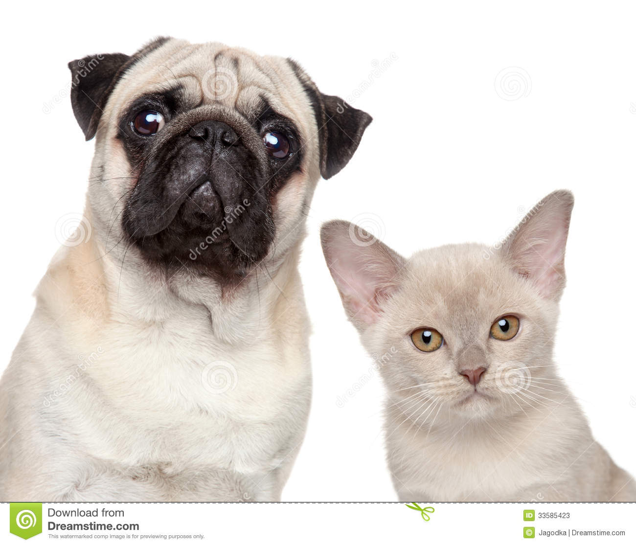 Dog and Cat together on a white background.