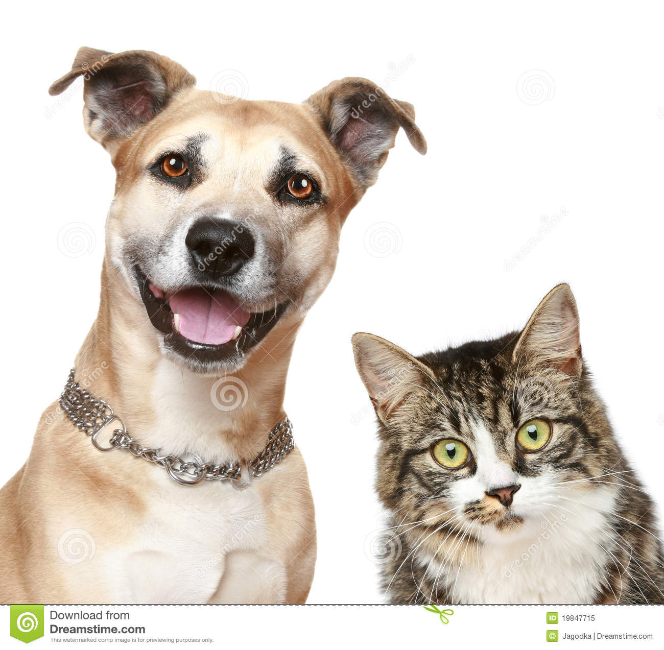 Dog And Cat On A White Background Stock Image Image Of Attentive Guardian 19847715