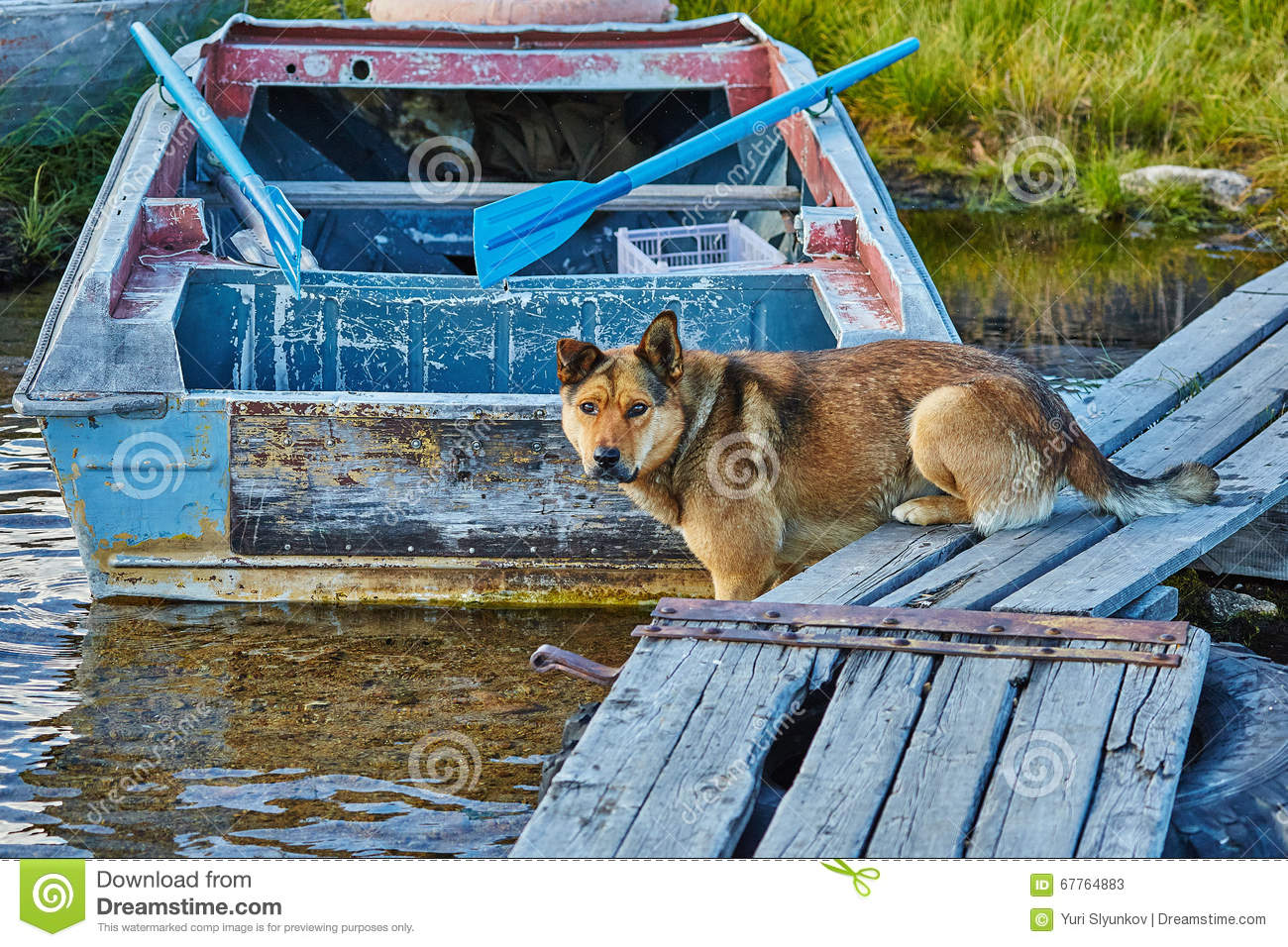 The dog catches small fish on a mooring. Jack London s lake. Autumn