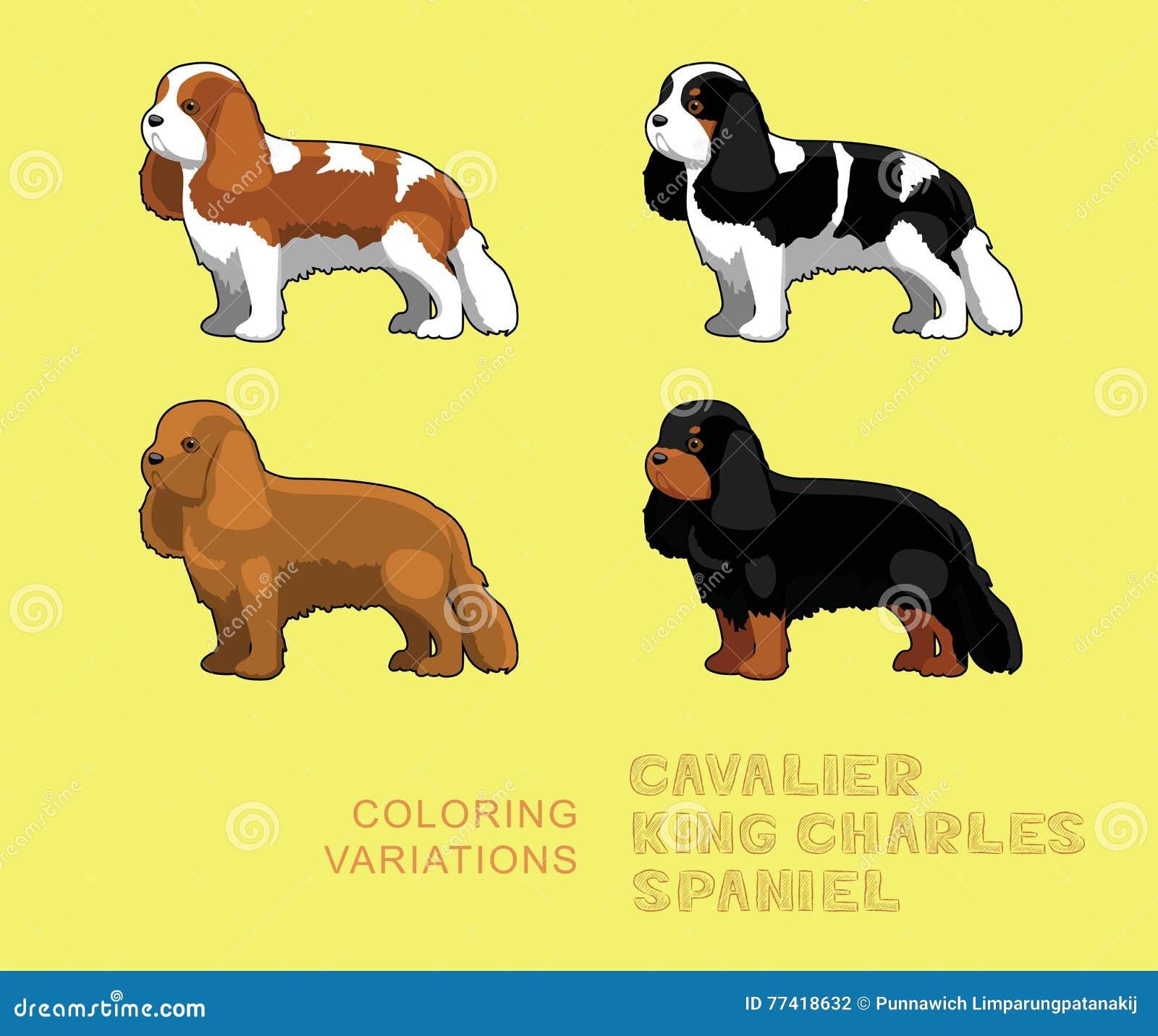 Download Dog Cavalier King Charles Spaniel Coloring Variations Vector Illustration Stock