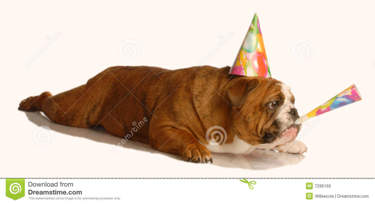 English Bulldog Wearing Birthday Hat And Blowing On Horn Isolated