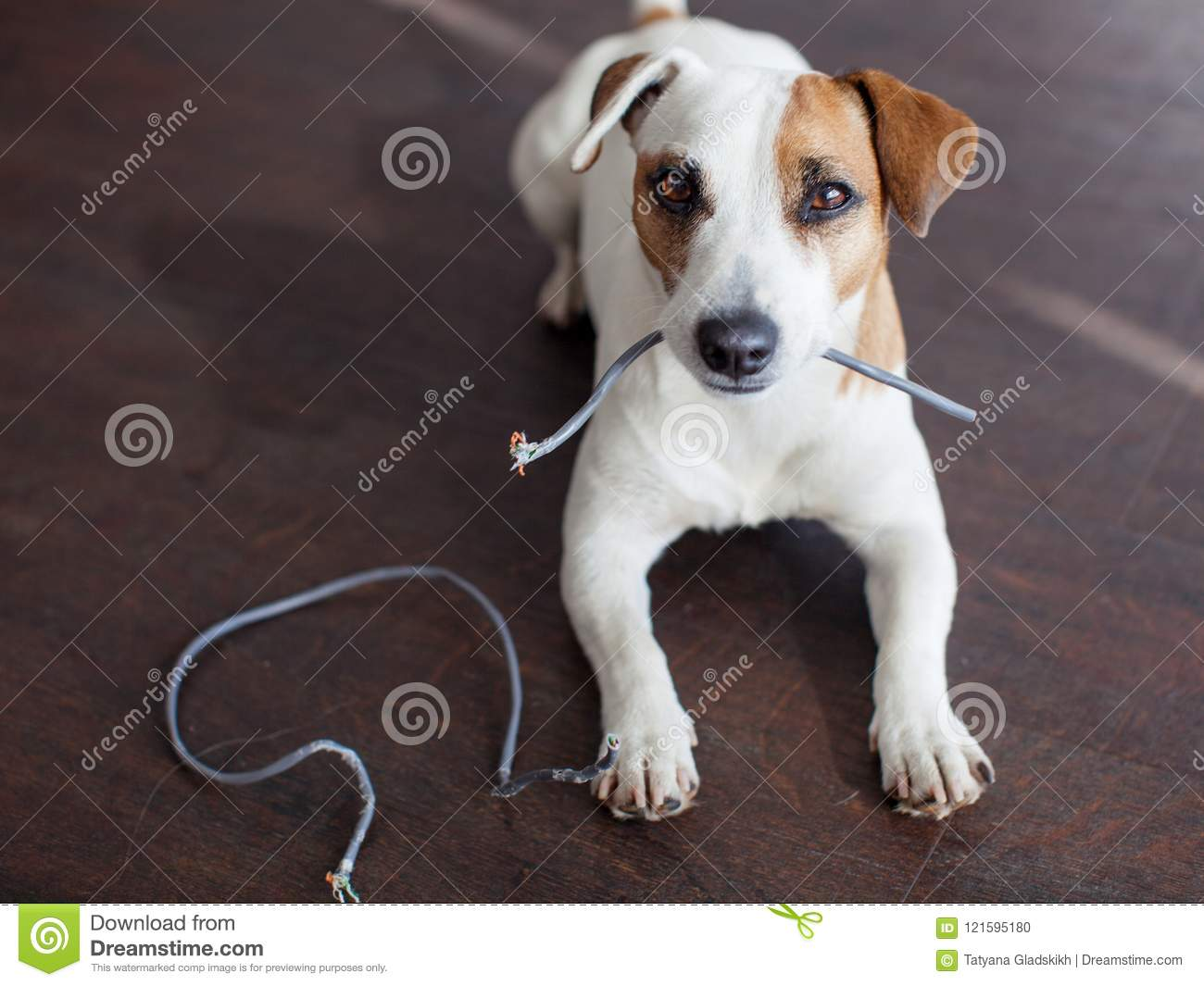 Dog chewed the wires stock photo. Image of expression - 121595180