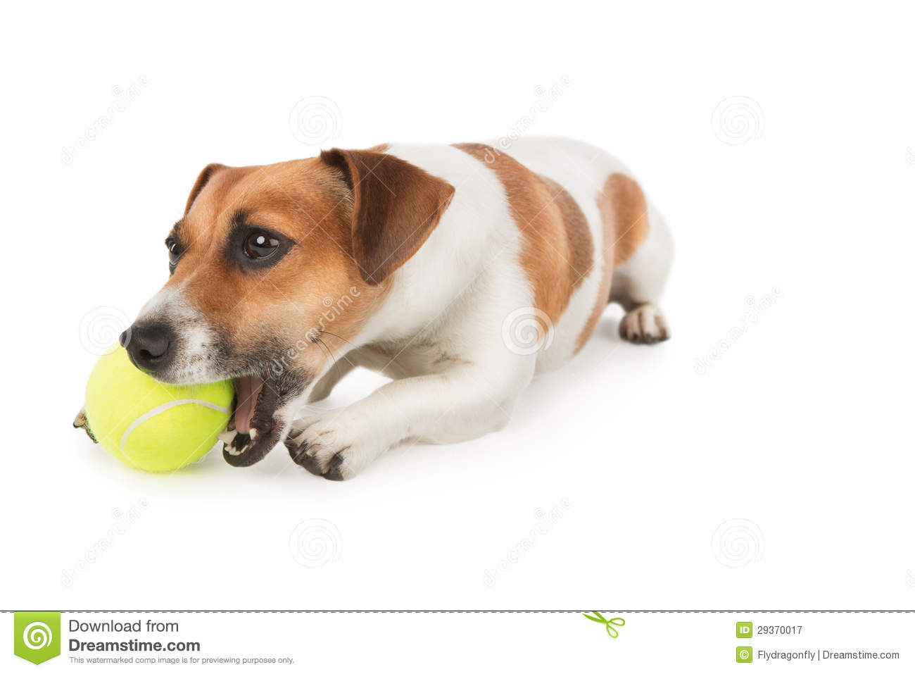 Dog ball clip art - photo#15