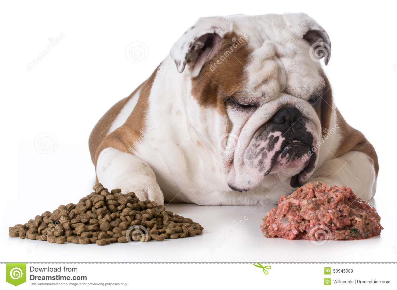 How To Switch Dog From Raw Food To Kibble