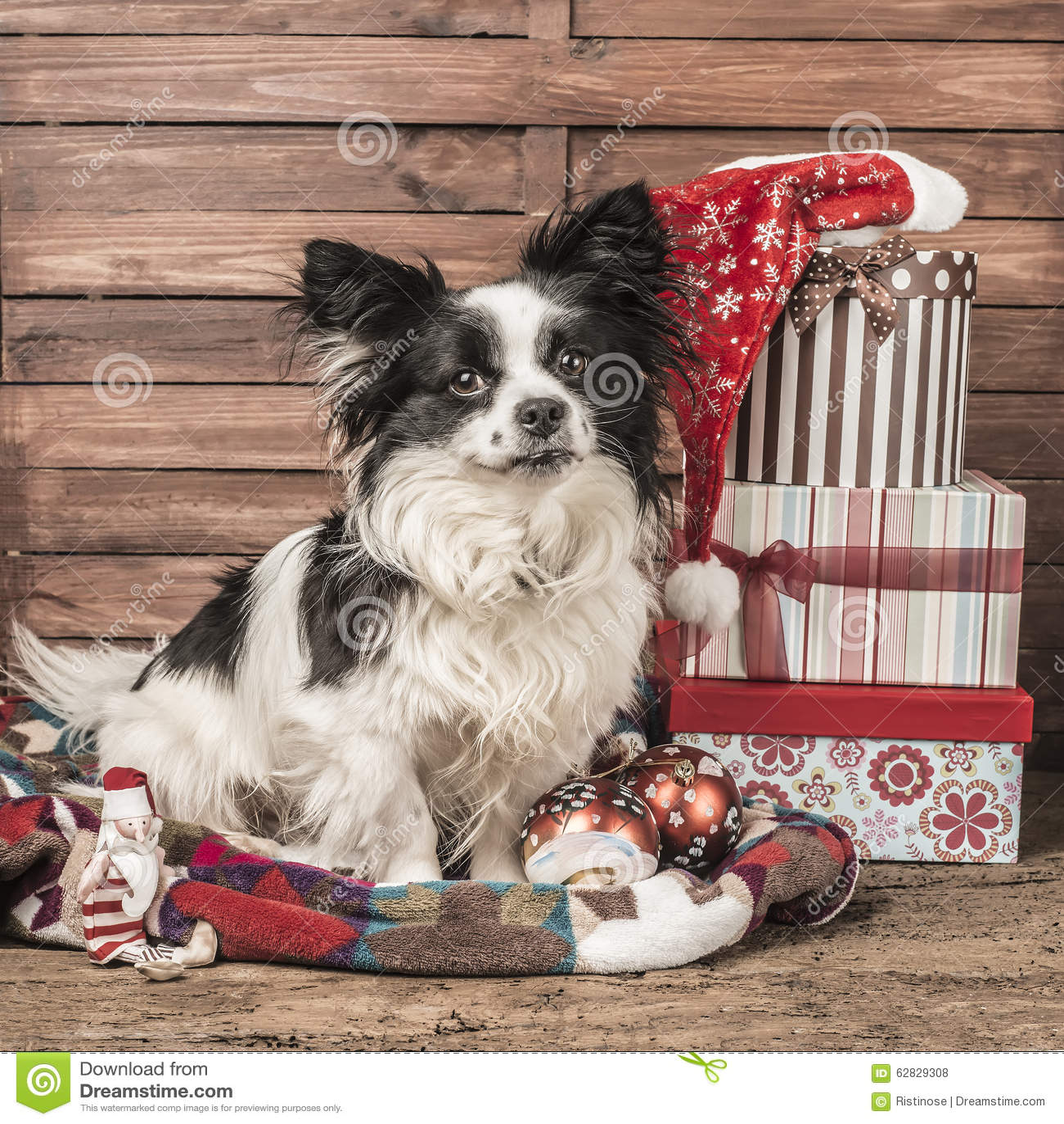Dog Christmas Greeting Card Stock Photo Image Of Home Portrait