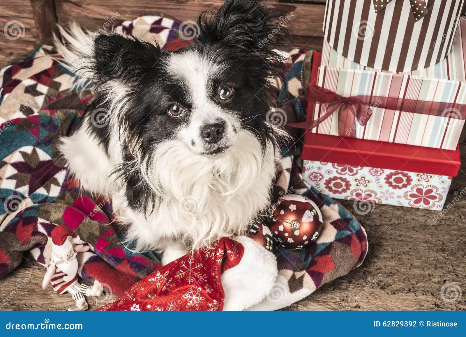 Dog Christmas Greeting Card Stock Photo Image Of Animal Dogs