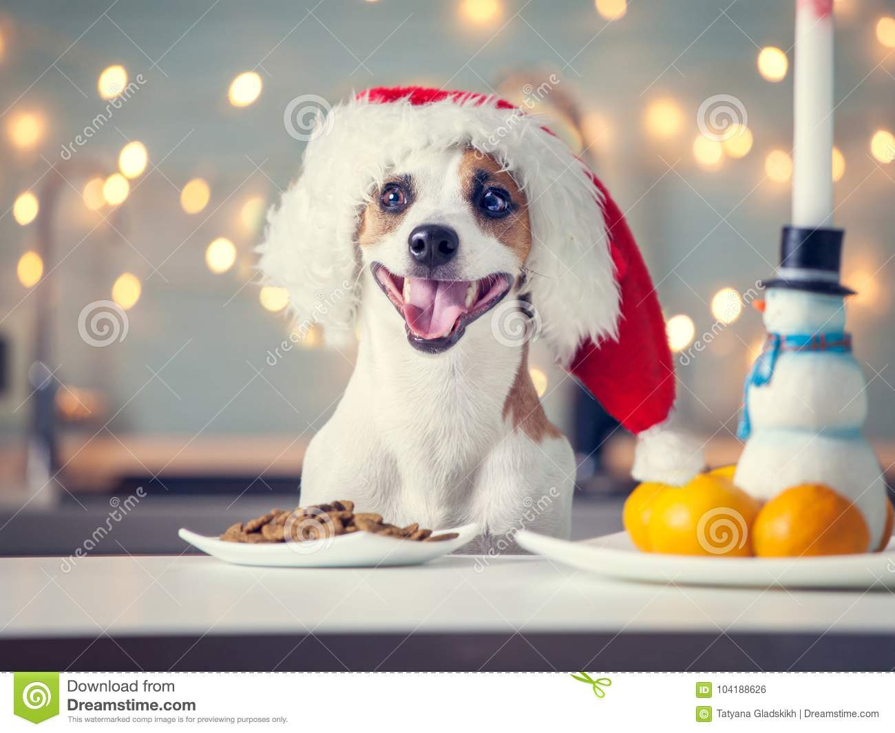 Dog in christmas hat eating food