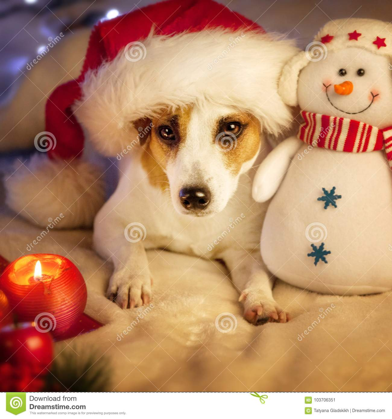 44e61fd55fd Dog in christmas hat stock image. Image of young
