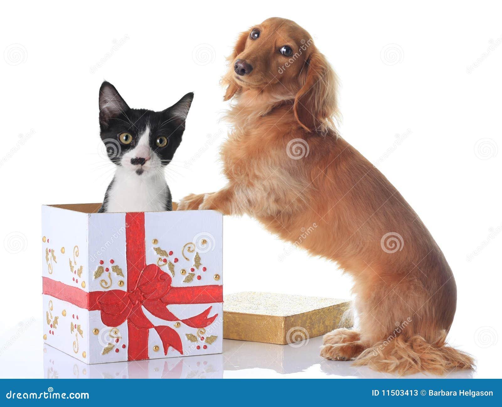 Dog and Christmas present.
