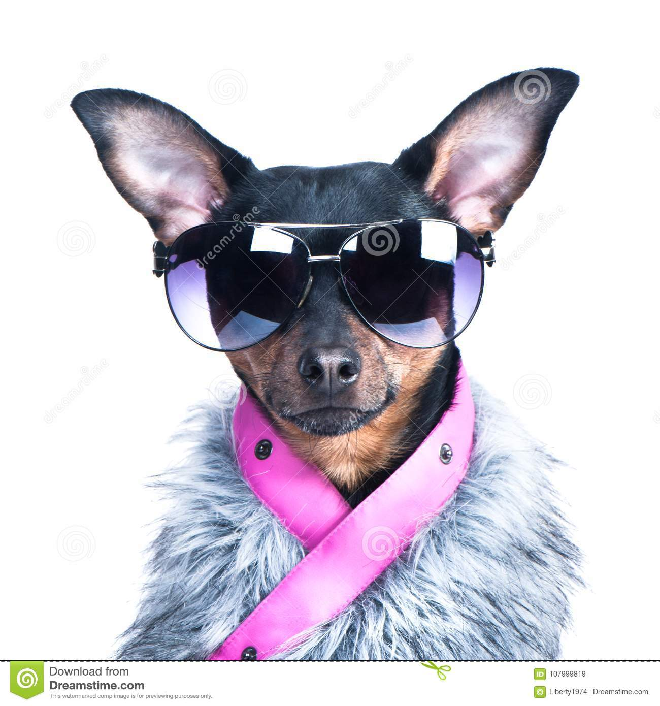 Dog In The Clothes Of A Skier, A Fur Jacket And Glasses
