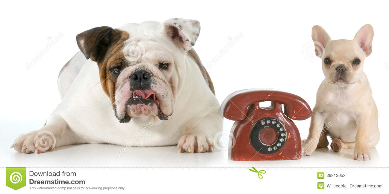 dog communication Webmd discusses dog body language, an elaborate and sophisticated system of nonverbal communication that, fortunately, we can learn to recognize and interpret.