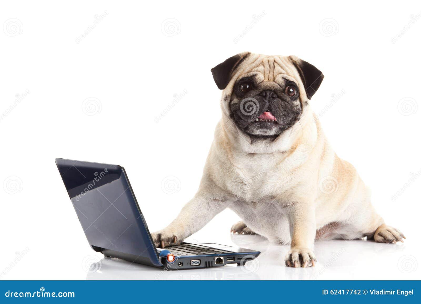Dog Computer Isolated On White Background Stock Photo