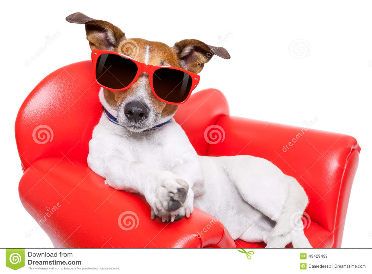 Dog Couch Or Sofa Stock Photo Image 43429439