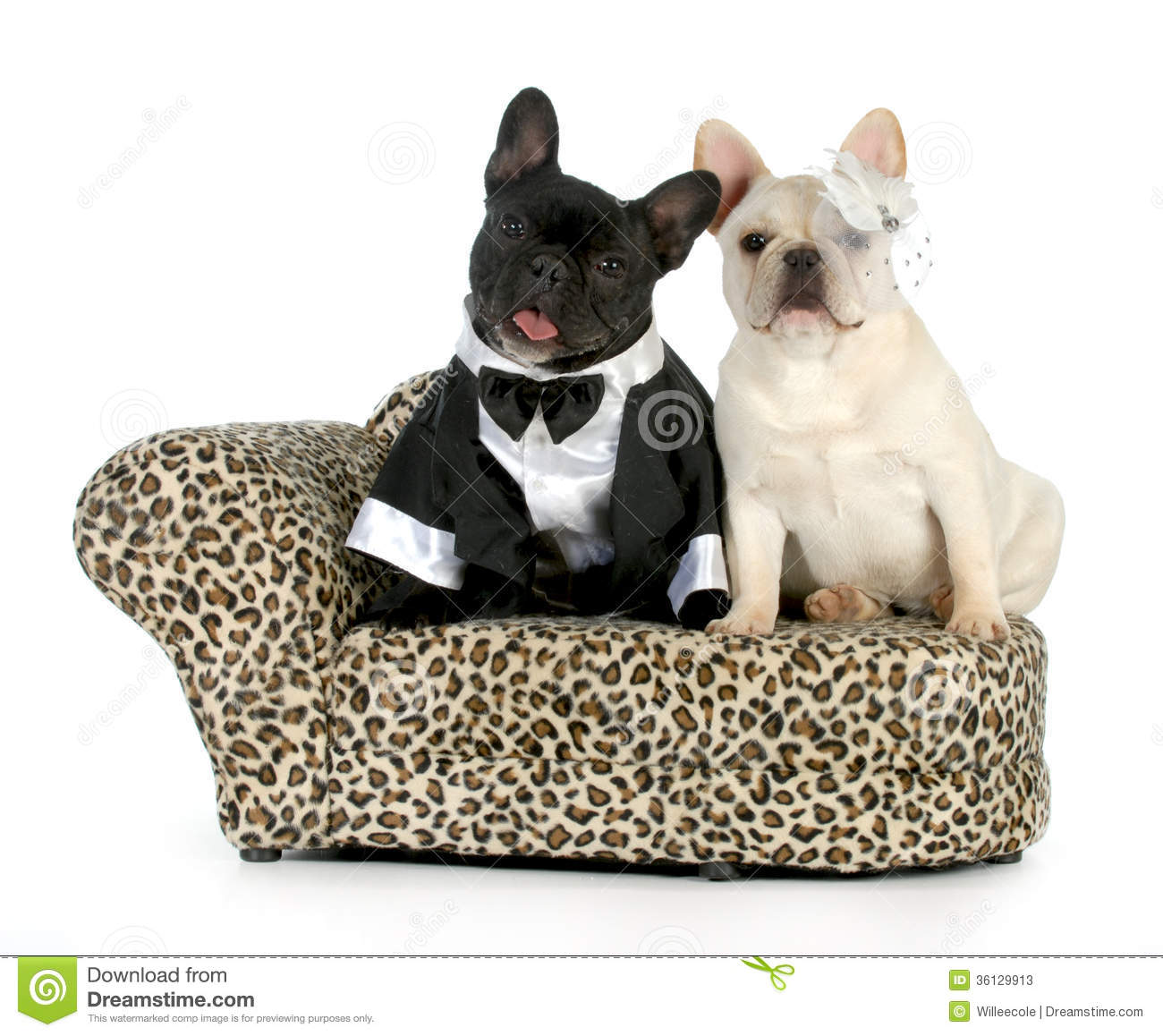 french bulldog dressed up dog couple stock image image of costume brindle pose 3433