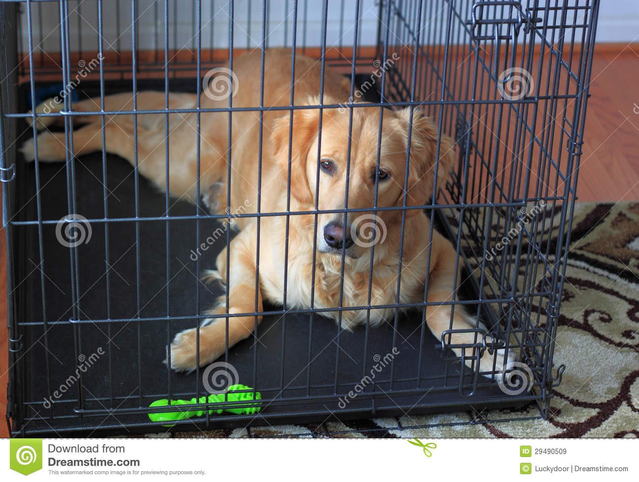 Crate Training A Puppy With Another Dog In The House