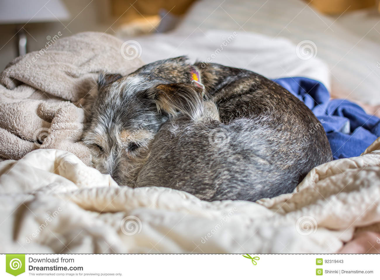 Dog curled into ball