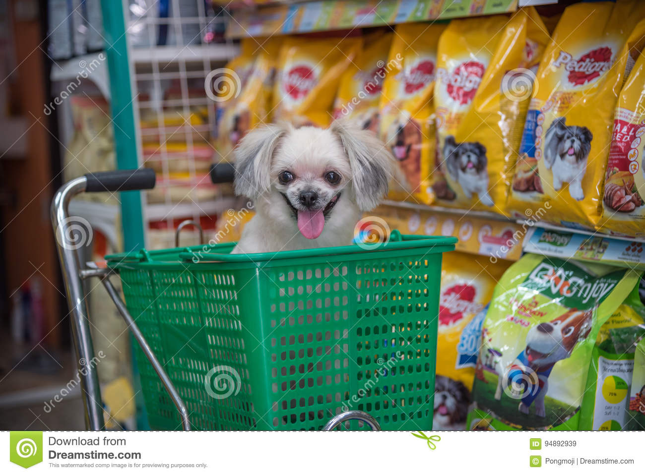 14 919 Pet Shop Photos Free Royalty Free Stock Photos From Dreamstime