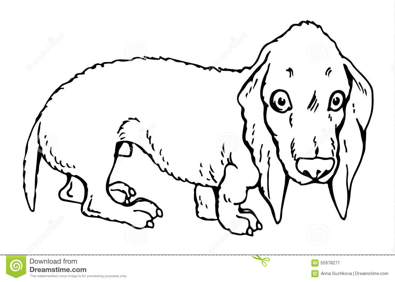Dog Dachshund Stock Vector Illustration Of Drawing Fauna 55978271