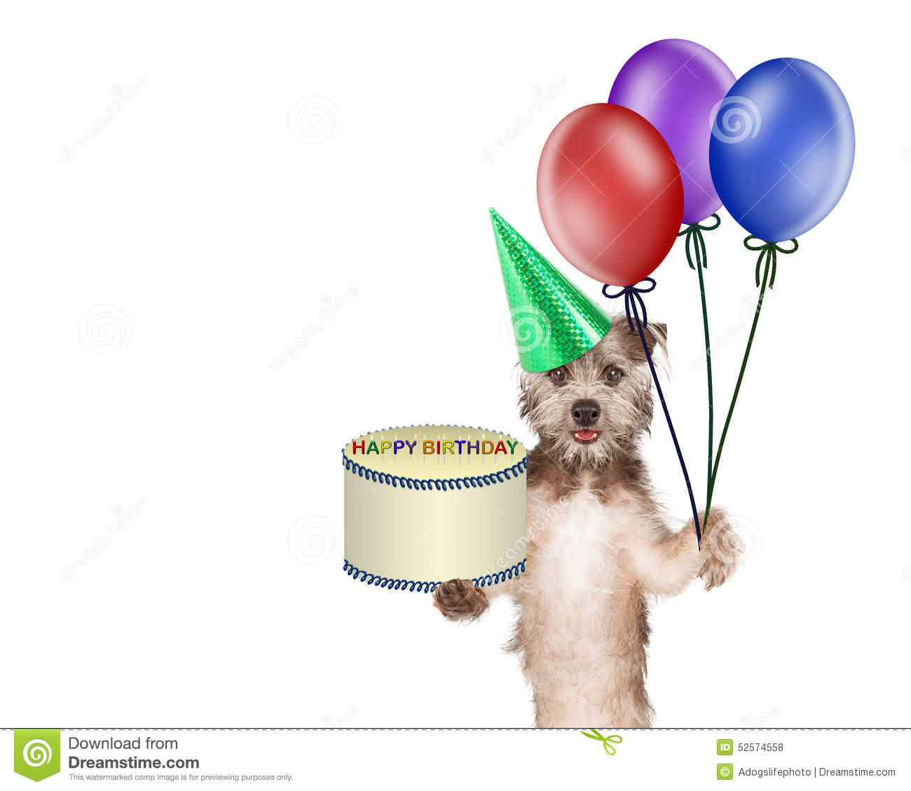 Cute And Happy Dog Carrying A Birthday Cake Colorful Balloons Image Has Copyspace Room For Text