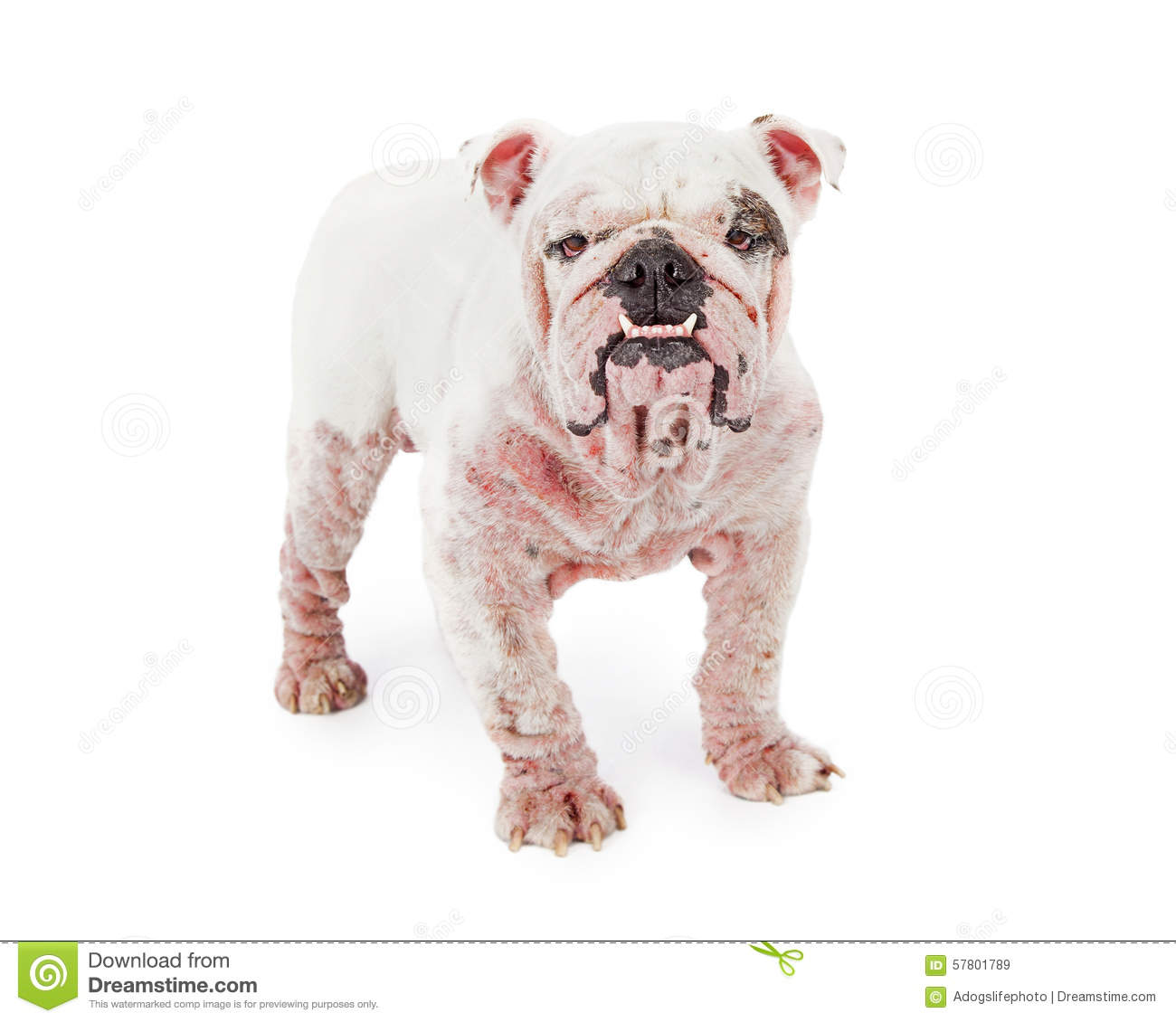 What Is Red Mange On A Dog