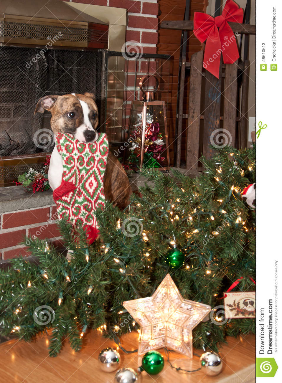 Christmas Tree Decorations For Dogs : Dog destroys christmas stock photo image